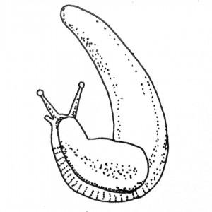 Stick and poke tattoo ideas - Slug sketch